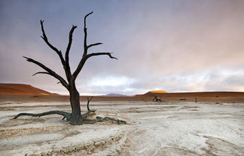 Sossusvlei & Deadvlei Excursion